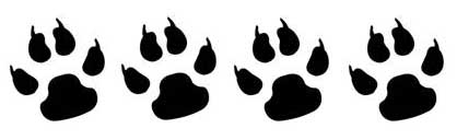 """""""Chi non ha avuto un cane non sa cosa significhi essere amato"""".  Shopenhauer. """"I cani sono una somma incalcolabile di ... 0314db448d"""